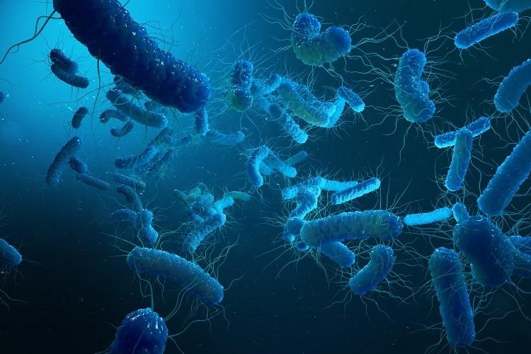 Enterobacterias Gram negativas Proteobacteria, bacteria such as salmonella, escherichia coli, yersinia pestis, klebsiella. 3D illustration.